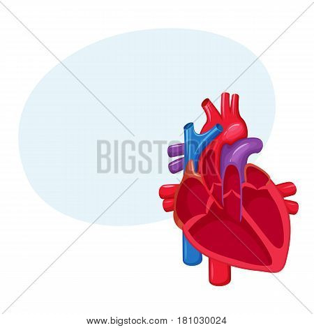 Human heart anatomy. Medical science vector illustration. Internal organ: atrium and ventricle, aorta, pulmonary trunk, valve and vein.