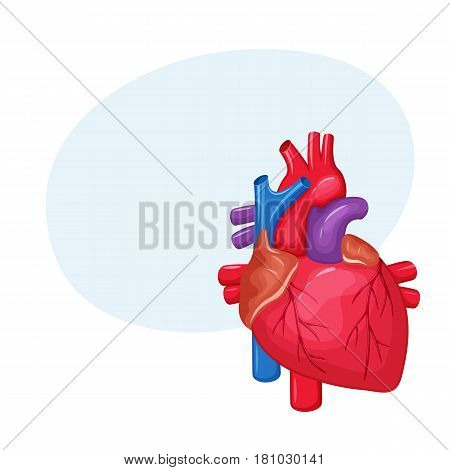 heart, anatomy, human, illustration, organ, coronary, medicine, medical, artery, blood, body, cardiac, healthcare, system, science, health, cardiology, biology, real, pulmonary, aorta, vector, white, attack, internal, healthy, flow, vein, heartbeat, ventr