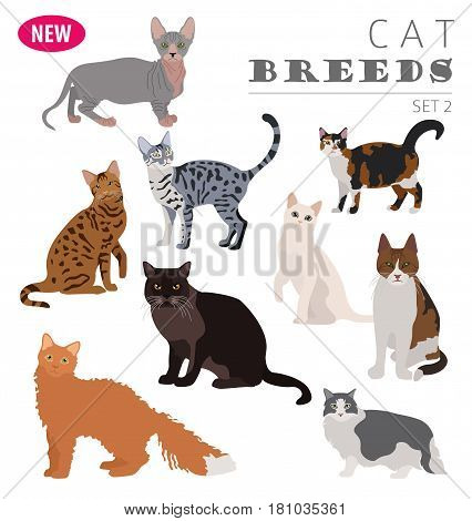 New Collection Cat Breeds_3