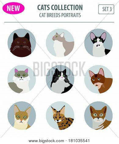 New Collection Cat Breeds_5