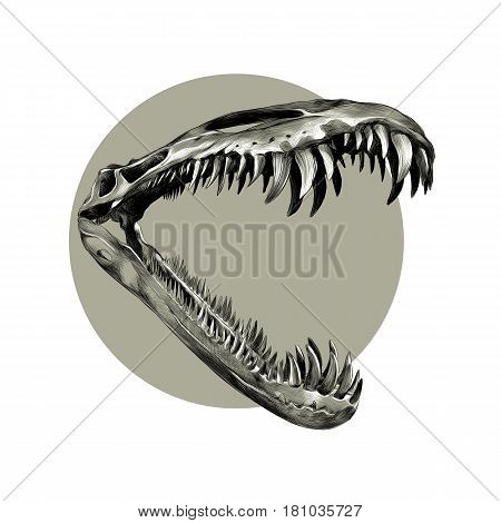 the skull of a dinosaur with big teeth close up sketch vector graphics black and white pattern on a brown background grey circle