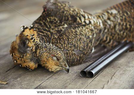 Killed A Bird Gun Hunter