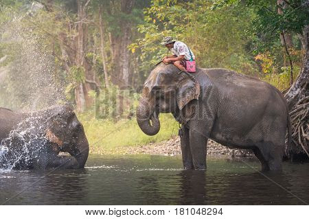 Kanjanaburi, Thailand-january 30 : An Unidentified Man Shows Playing With An Elephant In A River In