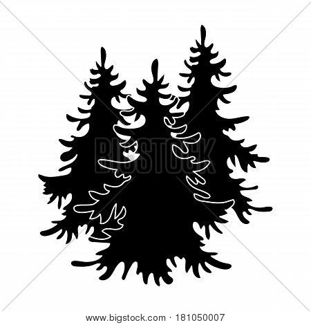 Canadian spruce. Canada single icon in black style vector symbol stock illustration .