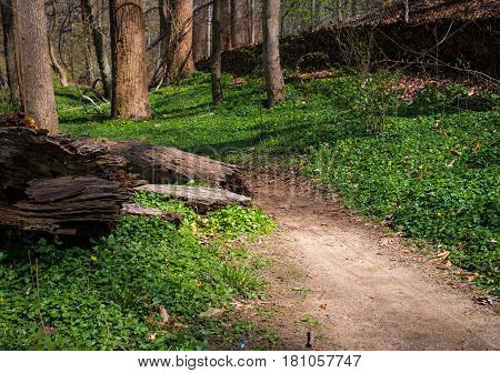 Pathway in forest outdoors during hike in maryland