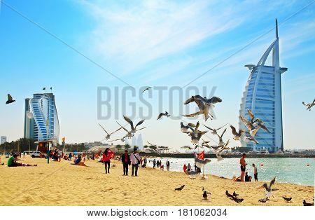 DUBAI - JANUARY 28 2017: Jumeirah public beach near Burj Al Arab the luxury Dubai hotel and Jumeirah hotel. Daytime view. Sandy beach with the sea and flaying seagulls.
