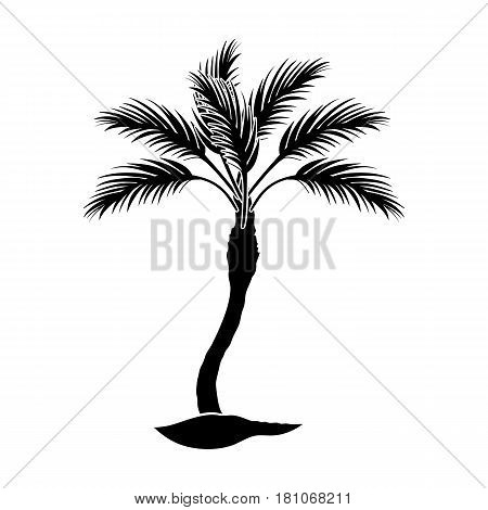 Palm beach tree.Summer rest single icon in black style vector symbol stock web illustration.