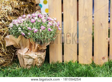 Spring background, gardening. Green grass and flowers over wooden fence in spring garden, countryside, close-up