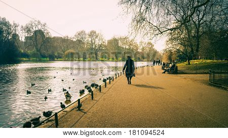 London UK - February 25 2016: Tourists watching the waterfowl on the lake in St James's Park London.
