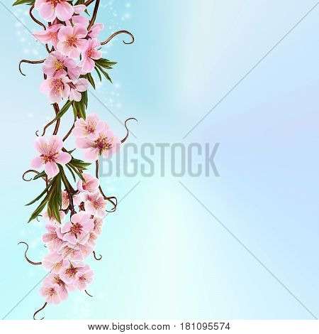 Spring background of flowering trees. A branch of flowers of delicate pink almonds.