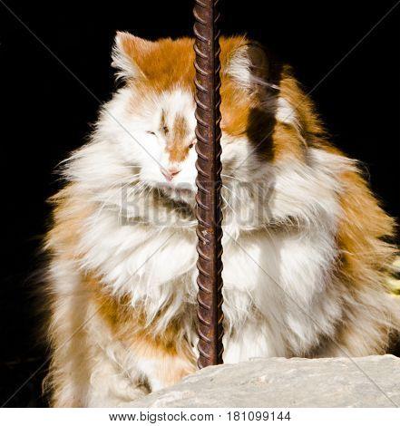 Cat, homeless redhead cat, red white cat