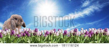 Bunny and pink and white Tulip on grassland blue sunny sky greeting Happy Eastern textspace