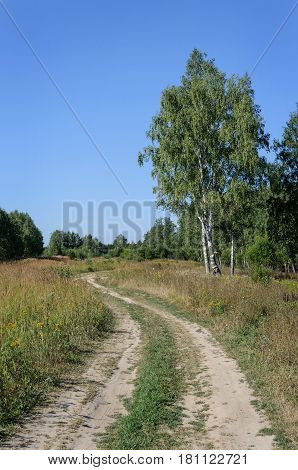 Country landscape dirt road in the forest glade sunny summer day