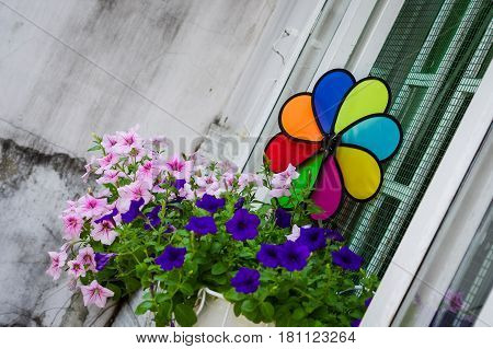 Colorful pinwheel on window with nice pink &purple flower pots