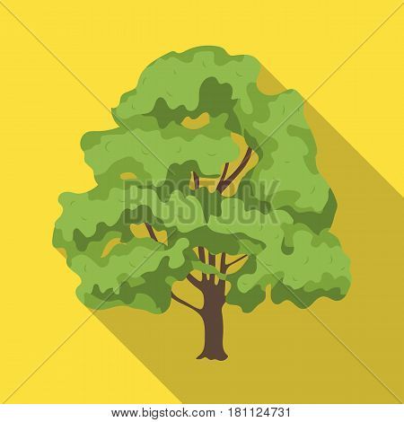Canadian maple. Canada single icon in flat style vector symbol stock illustration .