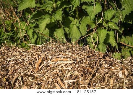Woodchips lying outside in a garden in front of a fence in bright sunshine