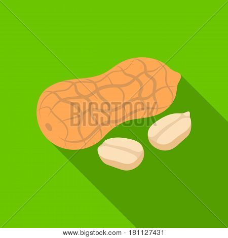 Peanut in the shell.Different kinds of nuts single icon in flat style vector symbol stock web illustration.