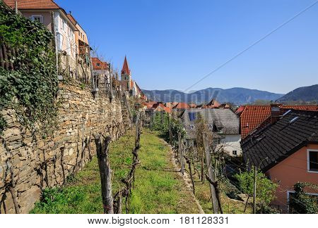 Market town of WeissŸenkirchen in der Wachau with terraced vineyards in the foreground. The District of Krems-Land, Lower Austria.