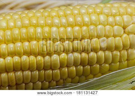 Close up of sweet corn on cobs kernels on white background corn vegetable isolated.Organic corn is a vitamin C food,magnesium-rich food & contains certain B vitamins & potassium.