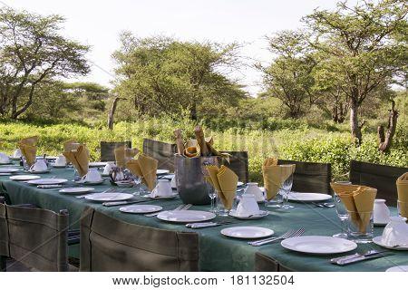 Elegant breakfast table set with champagne outdoors under acacia tree on safari in Serengeti Tanzania Africa.