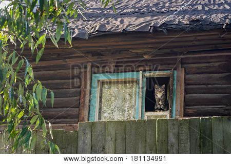 Cat in the old house in russian village