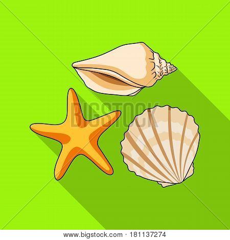 Seashells from the bottom of the sea.Summer rest single icon in flat style vector symbol stock web illustration.