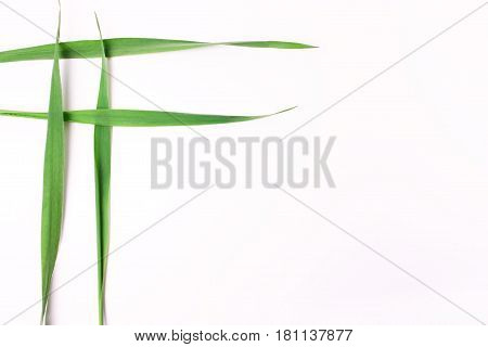Four Intertwined Grass Blades On A White Background.