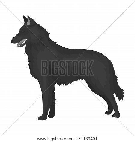 The dark Belgian wolf. Belgium single icon in monochrome style vector symbol stock web illustration.