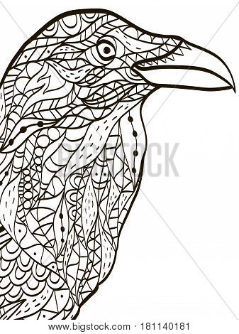 bird head raven coloring book for adults vector illustration. Anti-stress coloring for adult. Zentangle style nature. Black and white lines. Lace pattern.