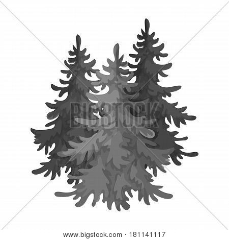 Canadian spruce. Canada single icon in monochrome style vector symbol stock illustration .