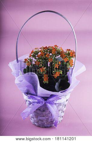Graceful Vase Of Flowers Over Pink Background