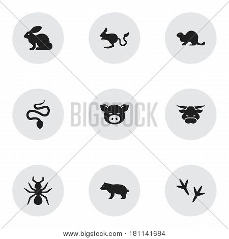 Set Of 9 Editable Zoology Icons. Includes Symbols Such As Wildlife Castor, Piggy, Bedbug And More. Can Be Used For Web, Mobile, UI And Infographic Design.