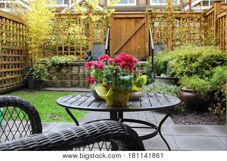 Small patio garden in early morning spring with a blooming primula on the table.