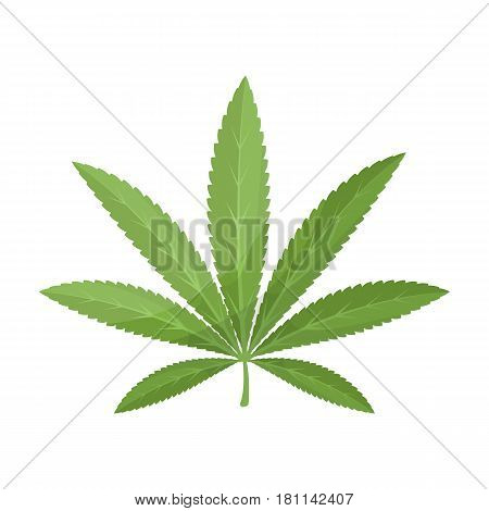 Green leaf of hemp.Hippy single icon in cartoon style vector symbol stock illustration .