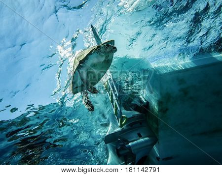 floating loggerhead sea turtle is under threat of exposure a screw sailing ship at sea