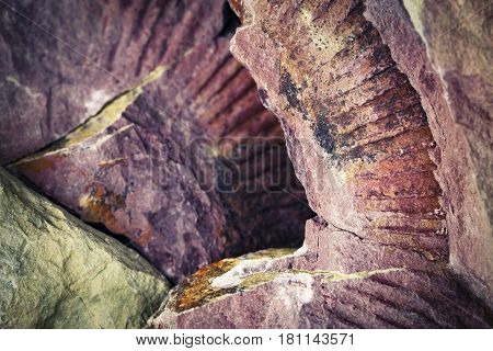 abstract background or texture imprint fossils limestone