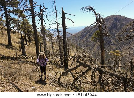 A Woman Hiker Makes Her Way Through Forest Fire Devastation on a Mountainside