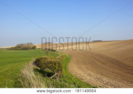 Chalky Plowed Soil And Wheat
