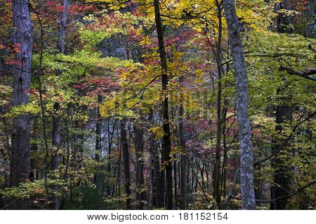 Beautiful layered, fall colors in the woods in eastern Tennessee in the Ocoee River Gorge