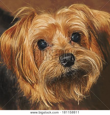 Illustrative image of brown and white Yorkie.