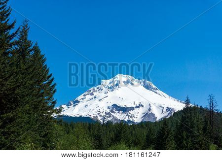 View of the snow capped peak of Mt Hood rising above Mount Hood National Forest
