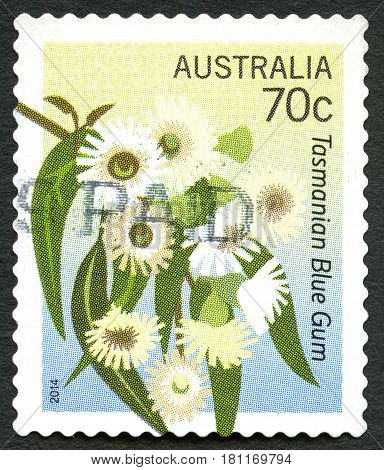 AUSTRALIA - CIRCA 2014: A used postage stamp from Australia depicting an illustration of a Tasmnian Blue Gum plantae circa 2014.
