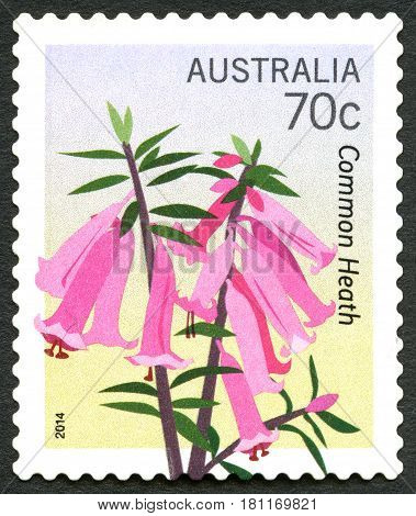 AUSTRALIA - CIRCA 2014: A used postage stamp from Australia depicting an illustration of a Common Heath plant circa 2014.