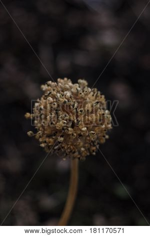 dried flower in the garden near with old path