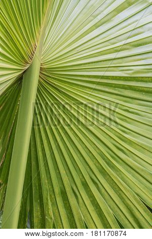 Palm, Up Close: isolated shot of a palm frond