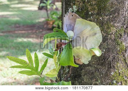 Growing on a Trunk: colorful exotic flower growing on a tree trunk