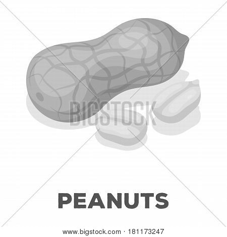 Peanut in the shell.Different kinds of nuts single icon in monochrome style vector symbol stock web illustration.