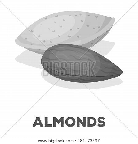 Almonds.Different kinds of nuts single icon in monochrome style vector symbol stock web illustration.