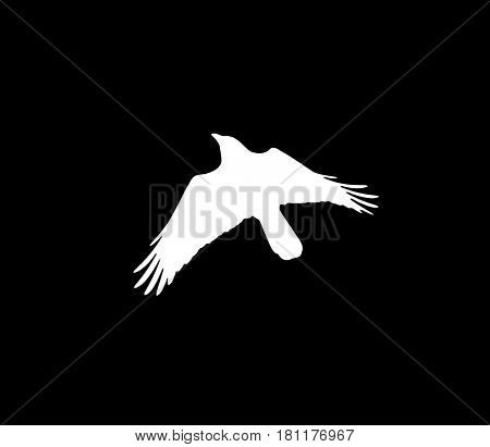 silhouette of a white crow on a black background .