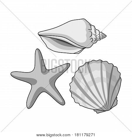 Seashells from the bottom of the sea.Summer rest single icon in monochrome style vector symbol stock web illustration.